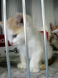 Kitten2-042 (Small)