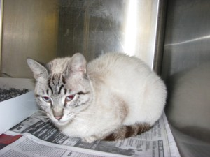 "A sweet, healthy cat killed by BARC even though I had found a home for her and placed a ""Hold"" on her."