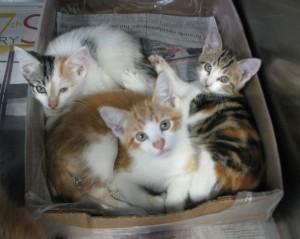 Wa&Cat2009-05-01 041-1