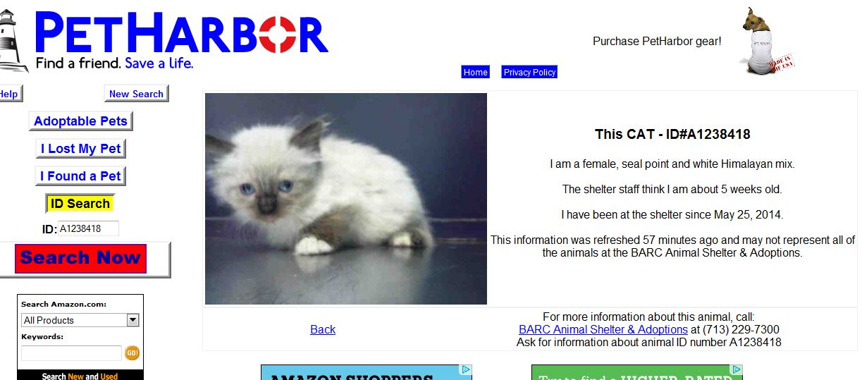 BARC would rather KILL this kitten than accept offers of foster and
