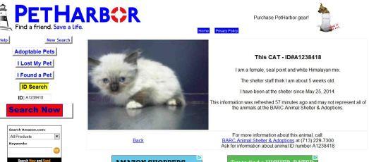 Kitten-PetHarbor