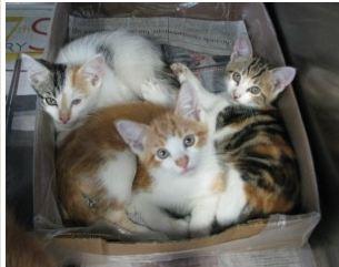 KittensatBARC