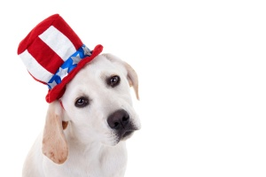 Vote for the candidates who will protect shelter pets!