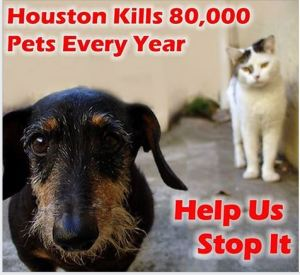 Houston Voters For Companion Animals