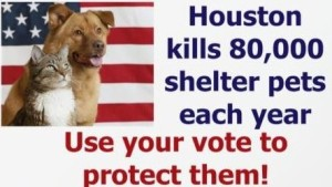 Vote for candidates who will protect shelter pets