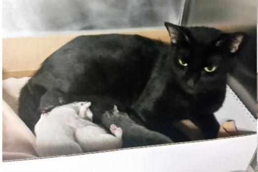 Cat-Kittens1
