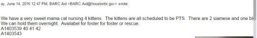 CatKittens5