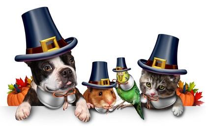 Thanksgiving Pet Celebration