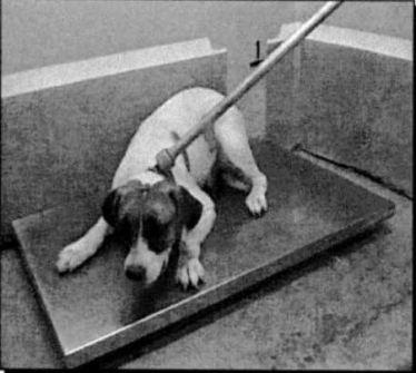 DogKilledMarchSweeps19.JPG