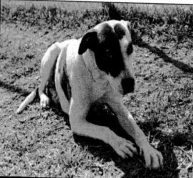 DogKilledMarchSweeps26.JPG