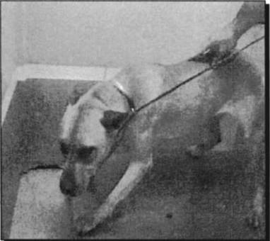 DogKilledMarchSweeps30.JPG